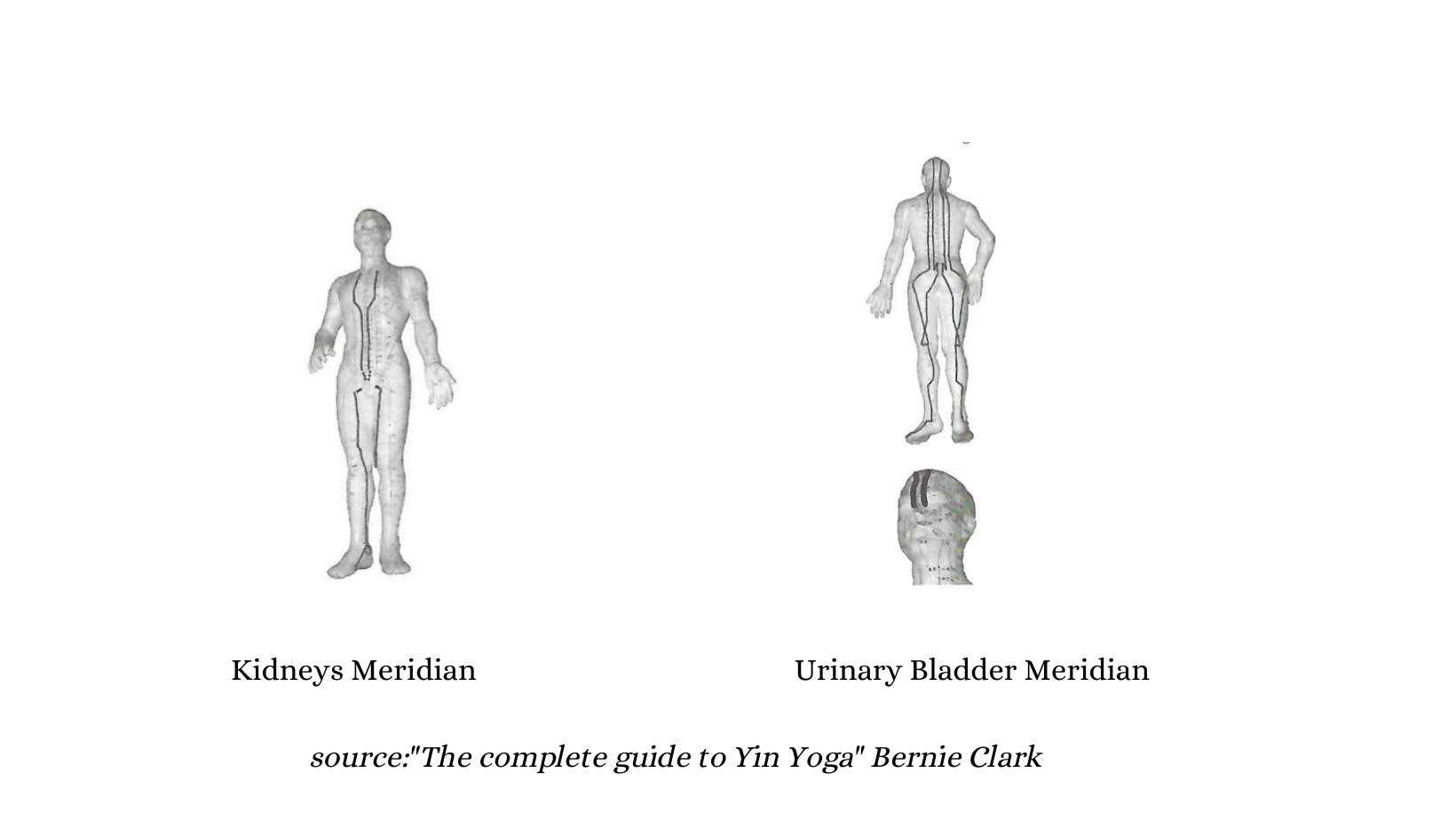 yin yoga winter meridians